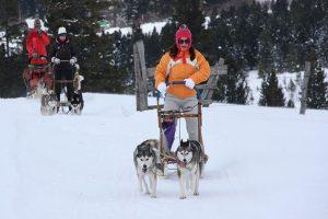 Frau steht auf Hundeschlitten und fährt mit ihren Kollegen um die Wette.