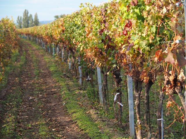 vines-2845892_640